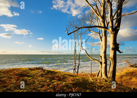 Germany, Mecklenburg-Western Pomerania, Fischland-Darß-Zingst, Darß Peninsula, Western Pomerania Lagoon Area National Park, coastal forest on the western beach, evening light, view of the stormy Baltic Sea - Stock Photo