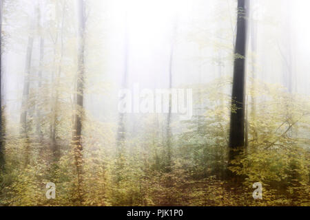 Foggy forest in autumn, abstract study, camera tampering when shooting, colour and contrast digital altered, film grain visible - Stock Photo