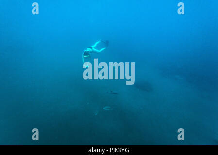 Young woman snorkeling with puffer fish in Indian ocean on Pulau Weh, Indonesia - Stock Photo