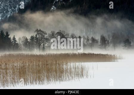 Winter fog on the shore of the Achensee in Tyrol, Austria, - Stock Photo