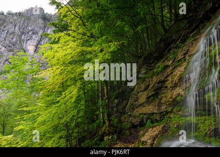 Obertraun, waterfall at path to alp Schönbergalm in Austria, Oberösterreich, Upper Austria, Salzkammergut - Stock Photo