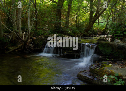 Small river with two small waterfalls flowing peacefully through a forest, the green reflecting in the water - Stock Photo