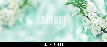 Spring background, white flowers in front of bokeh as a banner - Stock Photo