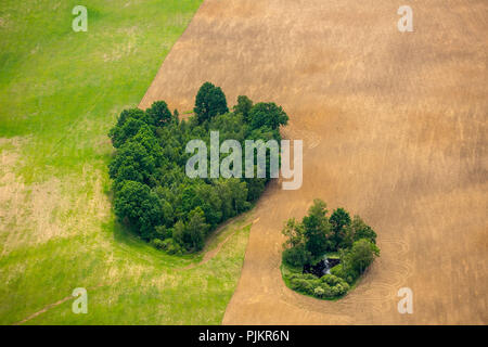 Obleze, Hinterpommern, Waldfleck in a wheat field, Baltic Sea coast, pomorskie, Poland - Stock Photo