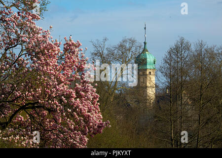 Blooming magnolia in front of the tower of the Glienicker hunting castle in Berlin. - Stock Photo