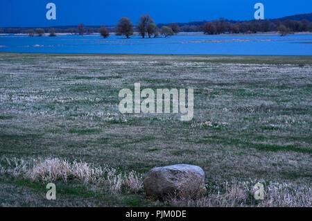 Germany, Brandenburg, Uckermark, Schwedt, National Park Lower Oder Valley, view over the flooded Oder meadows near Schwedt, light mood, blue hour - Stock Photo