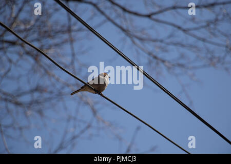 Bird on a wire. Small bird perched on electrical wire with blue sky and tree in the background. - Stock Photo