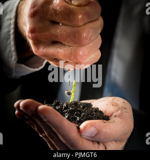 Closeup of male hands in a formal suit nurturing and watering a young green sprout. Conceptual of business start up, environmental care and protection