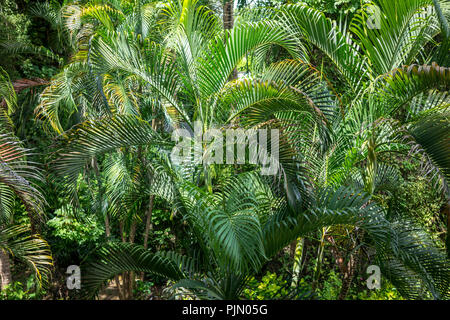 green leaves in exotic jungle landscape picture - Stock Photo