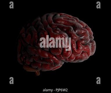 Human brain 3d illustration on black background - Stock Photo