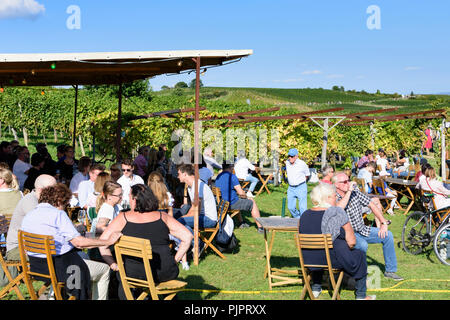 Pfaffstätten: vineyard, bar at festival 'Genussmeile' along 1st Vienna water line hiking path, winegrowing enterprises with own bars, visitors, Wiener