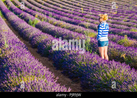 Lavender fields and a woman. - Stock Photo