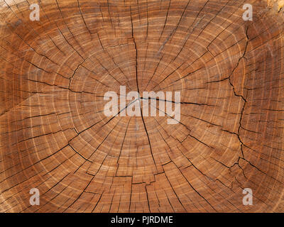 Wooden stump isolated on the white background. Round cut down tree with annual rings as a wood texture. Close up - Stock Photo