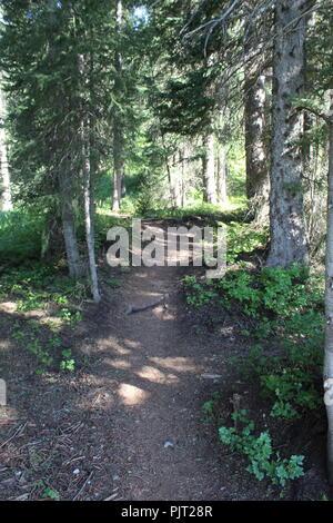 Hiking trail Jedediah Smith Wilderness - Stock Photo