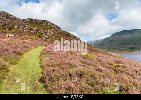 A grassy path through heather on The Cadair Idris mountain range near Barmouth in Wales - Stock Photo