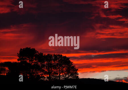 Gumtrees silhouetted against a blood red sky in the snowy mountains region, australia - Stock Photo