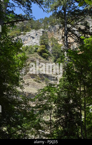 Trees grow on the slope of a high mountain, bare rocks, view from the foot of the mountain - Stock Photo