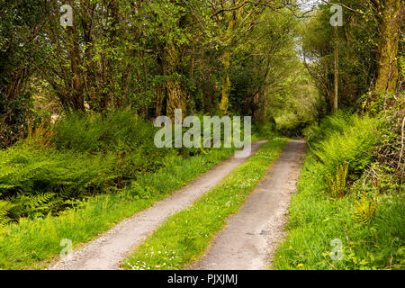 Ireland, Co Leitrim, Arigna, narrow country lane on Lough Allen Drive - Stock Photo