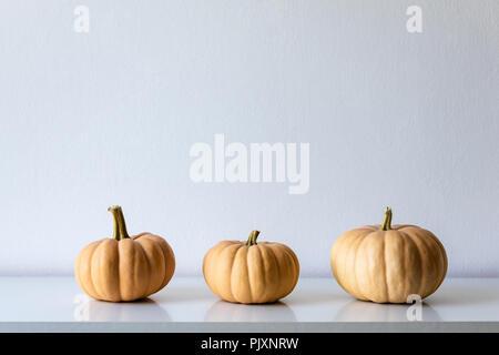 Happy Thanksgiving Background. Three pumpkins on white shelf against white wall. Modern minimal autumn inspired room decoration. - Stock Photo