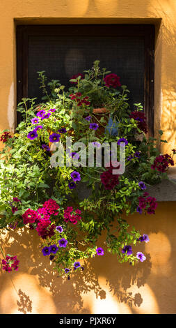 Flowers in plant pots on a windowsill - Stock Photo