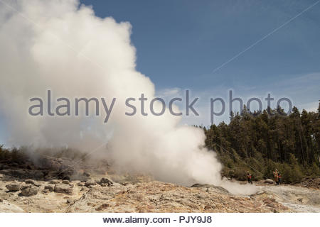 Rare Steamboat Geyser Eruption / Norris Geyser Basin, Yellowstone National Park, Wyoming - Stock Photo