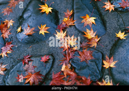 Fallen yellow Japanese maple leaves on shiny wet stones after a rain in Kyoto, Japan, Wabi-Sabi concept, abstract tranquil background. - Stock Photo