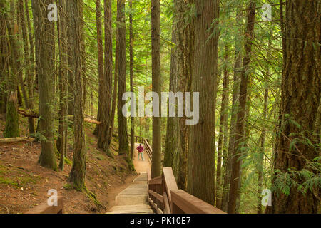 Trail to Lower Waterfall, Little Qualicum Falls Provincial Park, British Columbia, Canada - Stock Photo