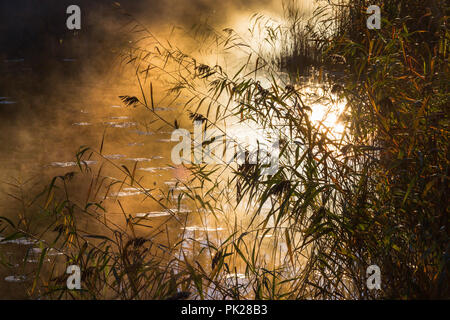 Reed in silhouettes at the beach and morning fog - Stock Photo