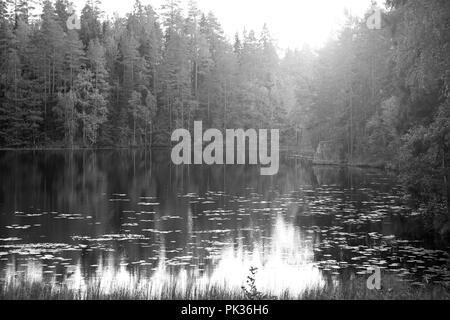 Magic light over small rural forest lake, black and white image. - Stock Photo