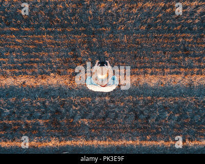 Top view of male farmer flying a drone with remote control in harvested wheat stubble field in summer sunset - Stock Photo