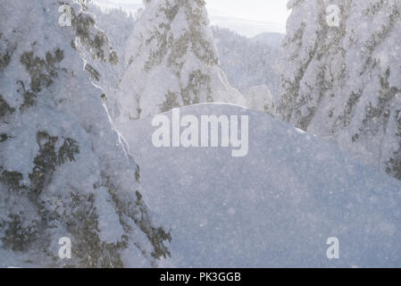 Christmas background with copy space. Falling snowflakes and snowy fir trees in snowdrifts. Sunny winter weather in the mountains - Stock Photo