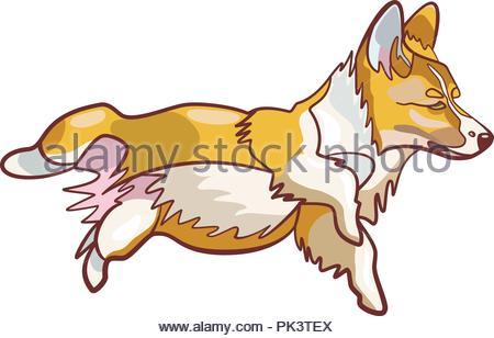 Cute funny cartoon dog vector puppy pet. Cute Welsh corgi dog cartoon style on white background - Stock Photo