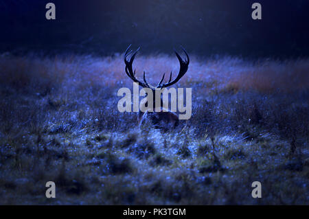 Lonely stag walking alone on field by the forest at night. - Stock Photo