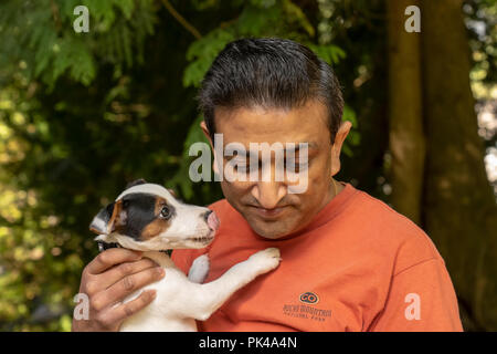 Issaquah, Washington, USA.  Man holding his two month old Jack Russell Terrier 'Harry' who is trying to give him a 'kiss'.  (PR) (MR) - Stock Photo