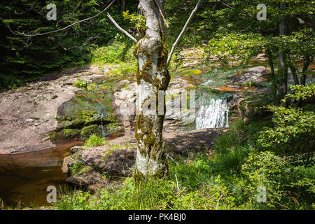 Beautiful, colorful mountain creek cascading through the thick forest and a foreground tree with moss on Old mountain - Stock Photo