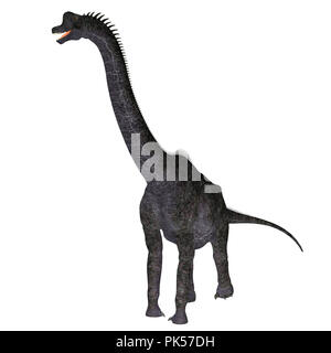 Brachiosaurus Dinosaur on White - Brachiosaurus was a herbivorous sauropod dinosaur that lived in North America during the Jurassic Period. - Stock Photo