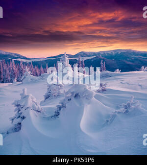 Dramatic winter scene in the Carpathian mountains. Fir trees covered fresh snow at frosty morning glowing first sunlight. - Stock Photo