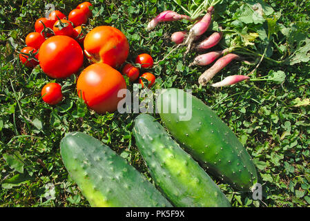organic garden picking, tomatoes, radish, cucumbers - Stock Photo