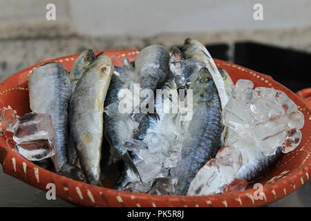Sardines with ice on plate waiting to be prepared in a market stall in Lisbon - Stock Photo