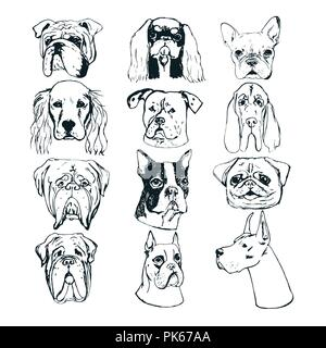 Hand drawn dog portraits on white background. Vector dog set. Sketches of purebred dogs. Vector elements for dog club logos. T-shirt prints - Stock Photo
