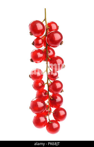 Red Currant cluster isolated on white background - Stock Photo