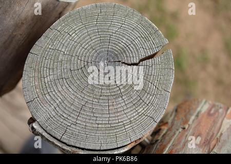 Close up view of a wood background with annual rings. High resolution image. Detailed organic surface - Stock Photo