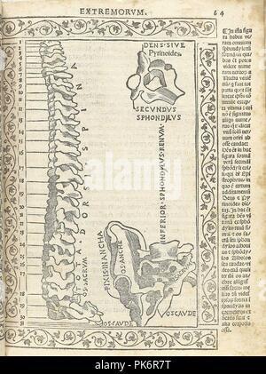Berengario p64r. - Stock Photo