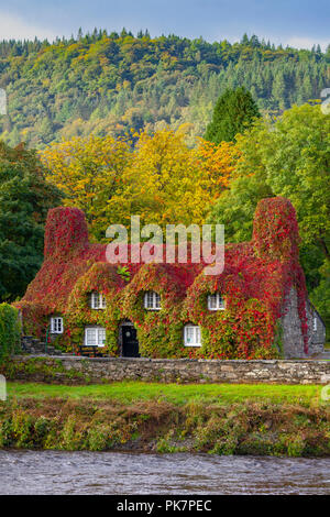 North Wales, 12th September 2018. UK Weather: After a night of heavy rain, sunshine returns to Conwy Valley, North Wales. Autumn colours of the Virginia Creeping Ivy on Tu Hwnt I'r Bont Tearooms to stand out as they begin to turn to red for Autumn, Llanrwst, Wales – © DGDImages/AlamyNews - Stock Photo