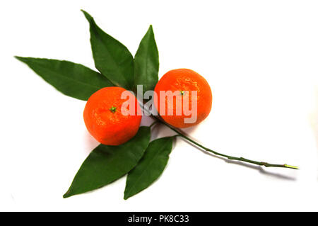 Two tangerines with white background and green leaves of orange tree - Stock Photo