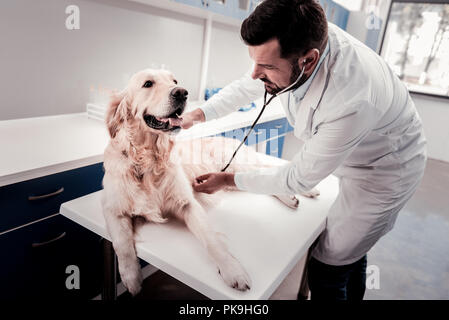 Attentive doctor examining his canine friend - Stock Photo