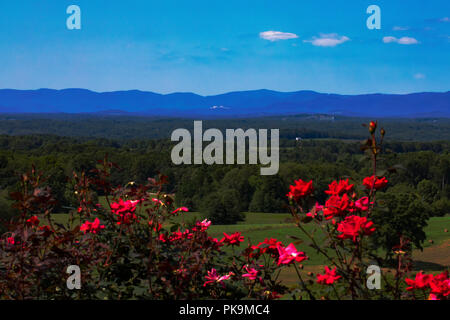 Wide-angle view of the Blue Ridge Mountains in North Carolina in late summer, including Stone Mountain. Blooming red roses provide foreground color. - Stock Photo