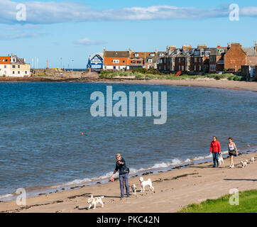 West Bay, North Berwick, East Lothian, Scotland, UK, 12th September 2018. UK Weather: A beautiful sunny but windy day on the Eastern Scottish coastline in the Firth of Forth. Dog walkers on West bay beach - Stock Photo