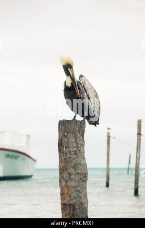 Pelican Perched on Wood Mooring Post and Overcast Caribbean Sea - Stock Photo