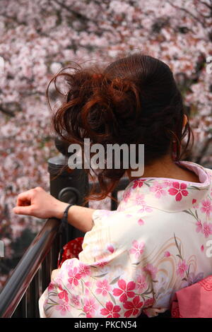 Japanese girl in pink kimono contemplating blossoming cherry tree - Stock Photo